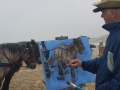 Model schilderen: Paard